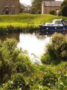 Prickwillow-swan